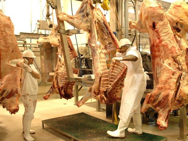 Bò được giết thịt như thế nào ở Úc? - 3