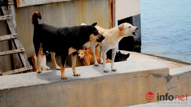 Chuyện về những chú chó nghĩa tình ở Trường Sa - 4