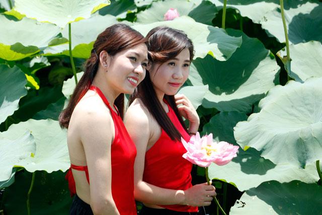 Sen tháng sáu giữa hồ Tây diệu vợi/ Anh nói rằng hoa như cánh tay thon. Hình minh họa: 24h.com.vn
