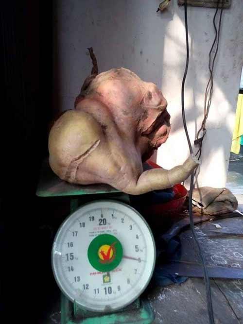 Phát hiện củ khoai lang hình thù lạ, nặng 6 kg - 3