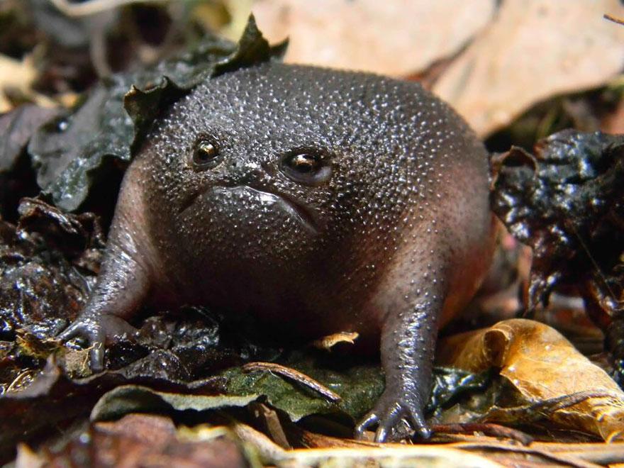 Sửng sốt trước loài cóc, ếch, nhái dị nhất hành tinh - 1