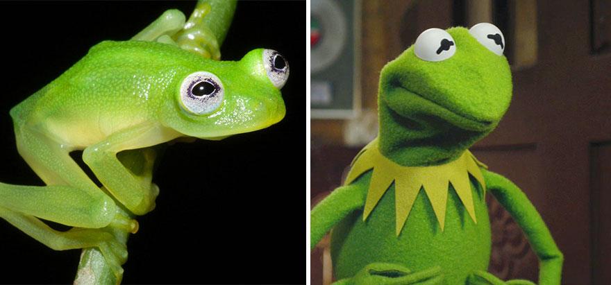 Sửng sốt trước loài cóc, ếch, nhái dị nhất hành tinh - 7