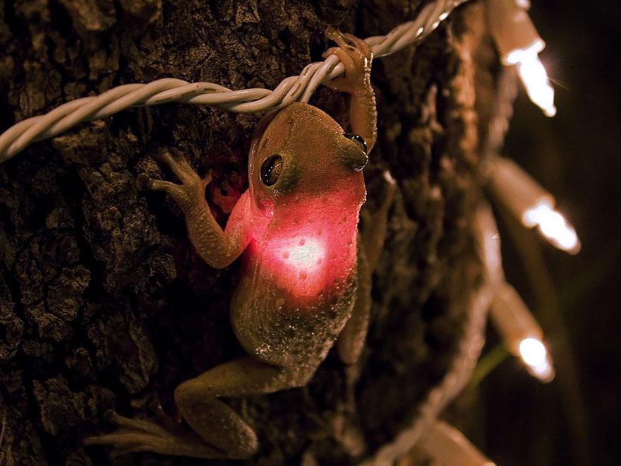 Sửng sốt trước loài cóc, ếch, nhái dị nhất hành tinh - 4