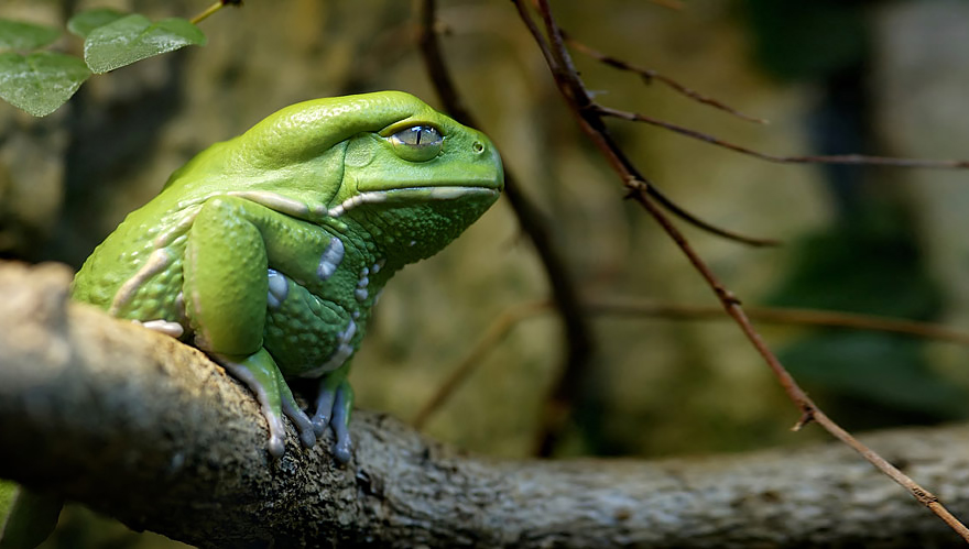 Sửng sốt trước loài cóc, ếch, nhái dị nhất hành tinh - 5