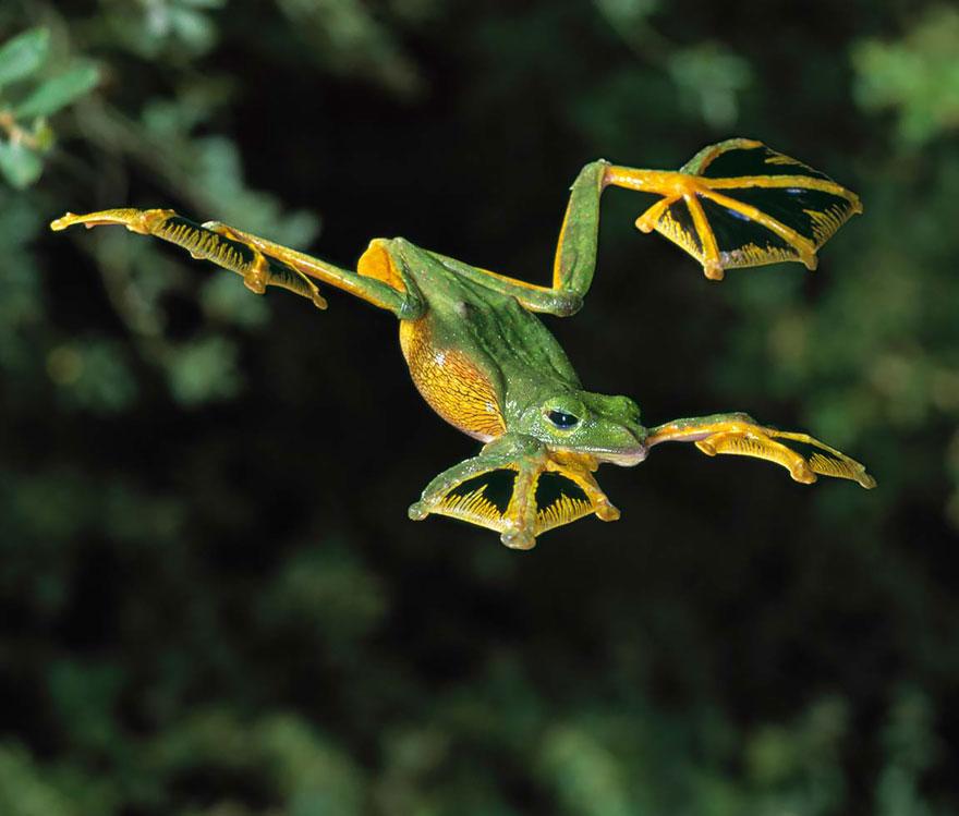 Sửng sốt trước loài cóc, ếch, nhái dị nhất hành tinh - 2