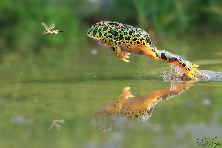 Sửng sốt trước loài cóc, ếch, nhái dị nhất hành tinh - 10