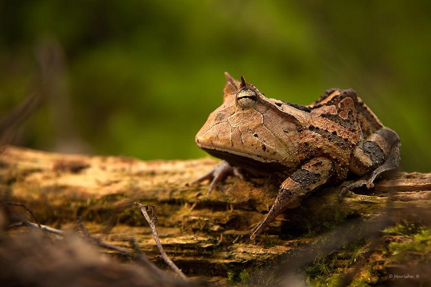 Sửng sốt trước loài cóc, ếch, nhái dị nhất hành tinh - 11