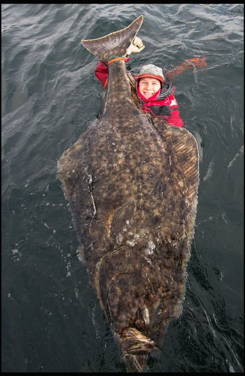 Cá bơn khổng lồ dài gấp rưỡi người trưởng thành - 2
