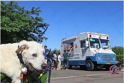 Chú chó khỏi bệnh ung thư sau khi được đi du lịch - 2