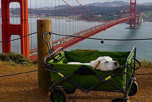 Chú chó khỏi bệnh ung thư sau khi được đi du lịch - 3
