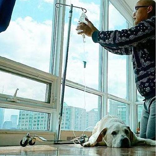 Chú chó khỏi bệnh ung thư sau khi được đi du lịch - 1