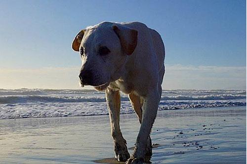 Chú chó khỏi bệnh ung thư sau khi được đi du lịch - 6