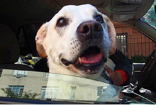 Chú chó khỏi bệnh ung thư sau khi được đi du lịch - 8