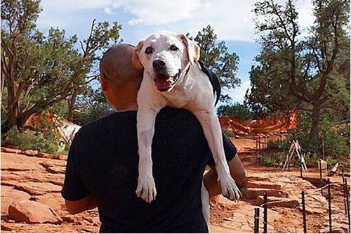 Chú chó khỏi bệnh ung thư sau khi được đi du lịch - 7
