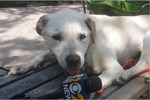 Chú chó khỏi bệnh ung thư sau khi được đi du lịch - 5