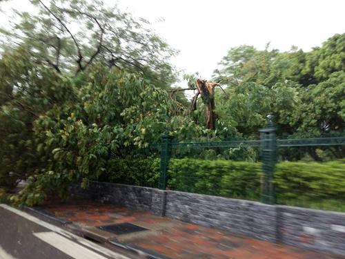 Mưa giông khủng khiếp quật ngã hàng loạt cây xanh tại Hà Nội - 25