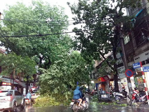 Mưa giông khủng khiếp quật ngã hàng loạt cây xanh tại Hà Nội - 26