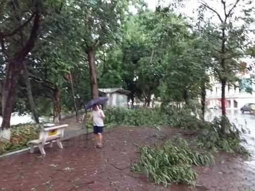 Mưa giông khủng khiếp quật ngã hàng loạt cây xanh tại Hà Nội - 28