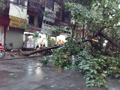 Mưa giông khủng khiếp quật ngã hàng loạt cây xanh tại Hà Nội - 27