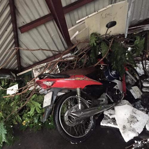 Mưa giông khủng khiếp quật ngã hàng loạt cây xanh tại Hà Nội - 21