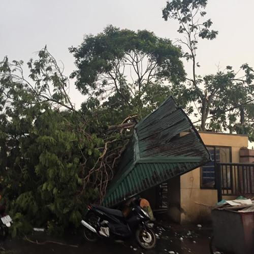 Mưa giông khủng khiếp quật ngã hàng loạt cây xanh tại Hà Nội - 20