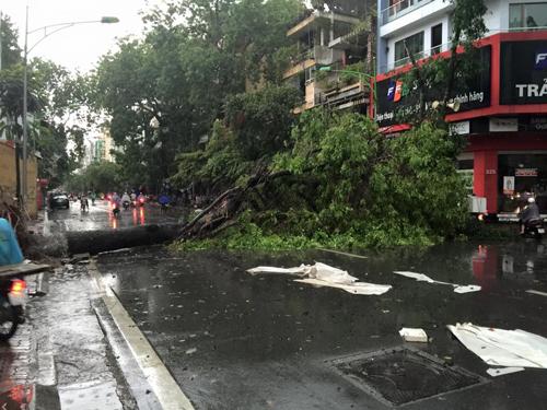 Mưa giông khủng khiếp quật ngã hàng loạt cây xanh tại Hà Nội - 22