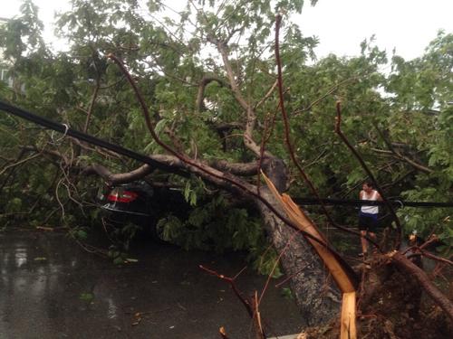Mưa giông khủng khiếp quật ngã hàng loạt cây xanh tại Hà Nội - 16