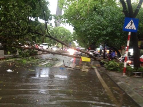 Mưa giông khủng khiếp quật ngã hàng loạt cây xanh tại Hà Nội - 15