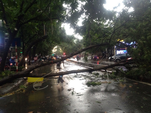 Mưa giông khủng khiếp quật ngã hàng loạt cây xanh tại Hà Nội - 18