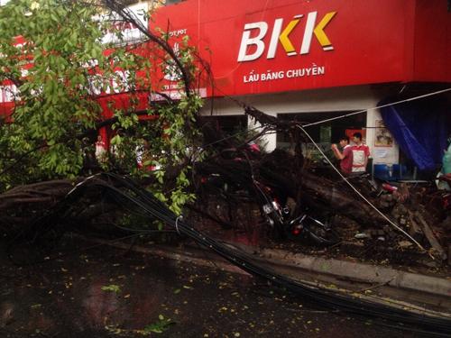 Mưa giông khủng khiếp quật ngã hàng loạt cây xanh tại Hà Nội - 19