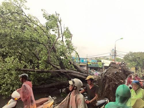 Ảnh: Giông lốc kinh hoàng, giao thông Hà Nội nhiều nơi tê liệt - 25