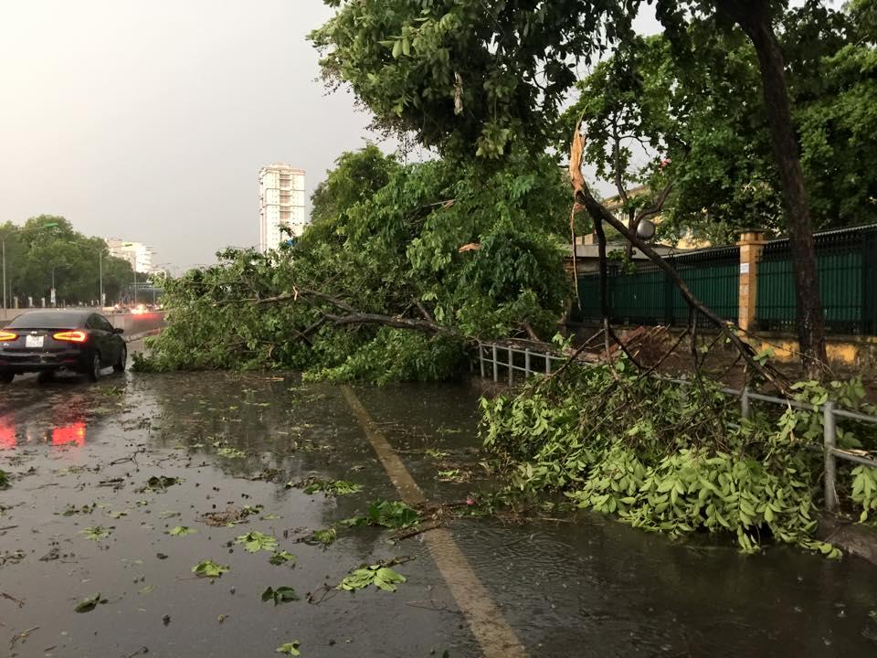 Mưa giông khủng khiếp quật ngã hàng loạt cây xanh tại Hà Nội - 1