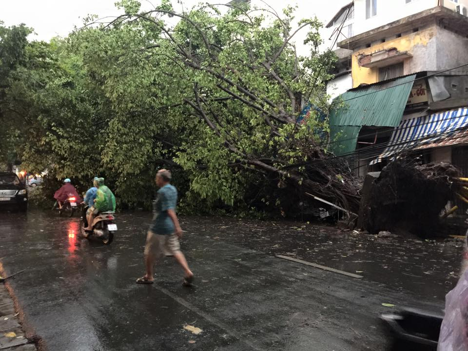 Mưa giông khủng khiếp quật ngã hàng loạt cây xanh tại Hà Nội - 2