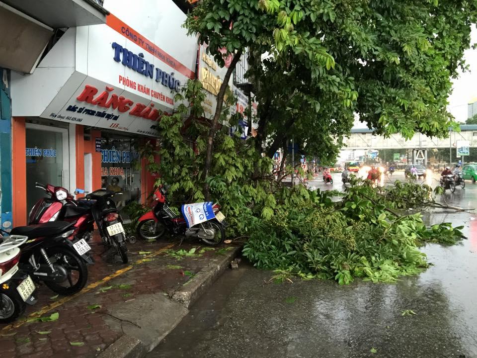 Mưa giông khủng khiếp quật ngã hàng loạt cây xanh tại Hà Nội - 5