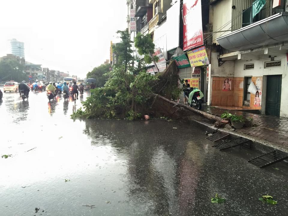 Mưa giông khủng khiếp quật ngã hàng loạt cây xanh tại Hà Nội - 4