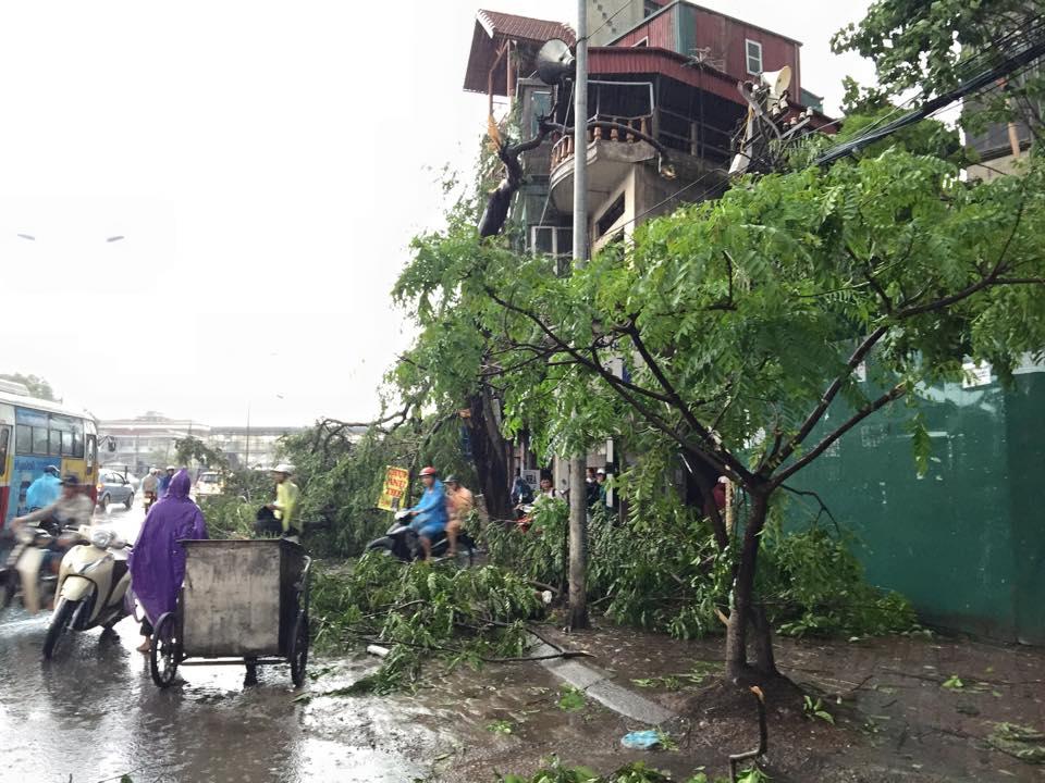 Mưa giông khủng khiếp quật ngã hàng loạt cây xanh tại Hà Nội - 3