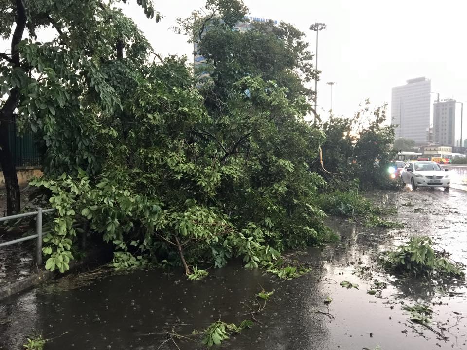 Mưa giông khủng khiếp quật ngã hàng loạt cây xanh tại Hà Nội - 6