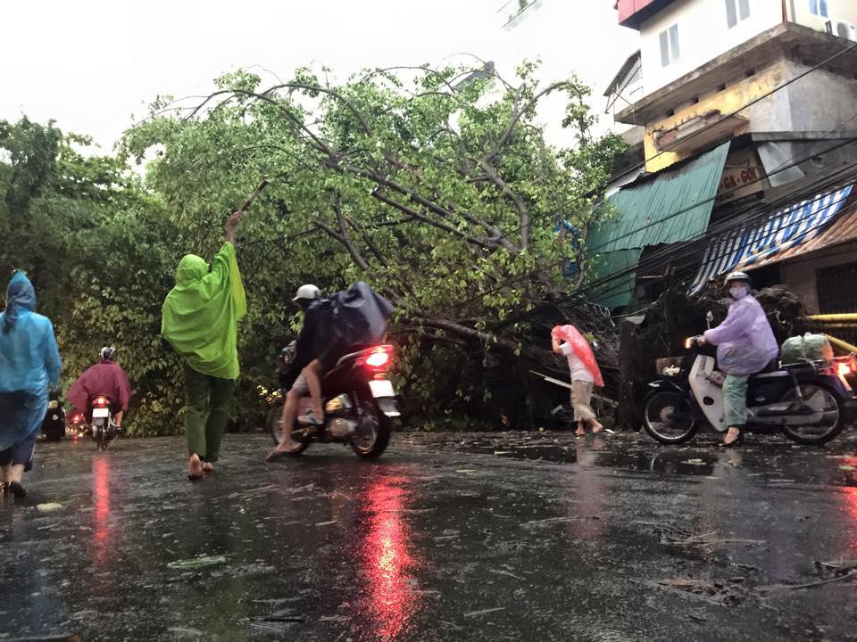 Mưa giông khủng khiếp quật ngã hàng loạt cây xanh tại Hà Nội - 11