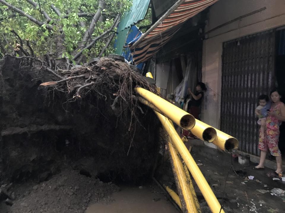 Mưa giông khủng khiếp quật ngã hàng loạt cây xanh tại Hà Nội - 12