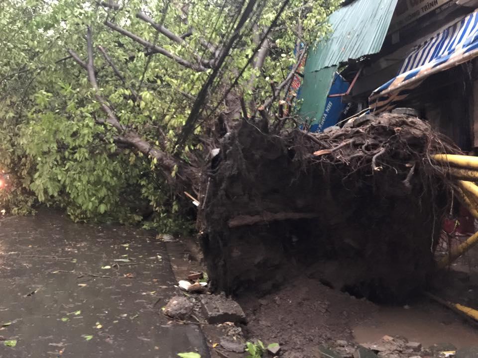 Mưa giông khủng khiếp quật ngã hàng loạt cây xanh tại Hà Nội - 13
