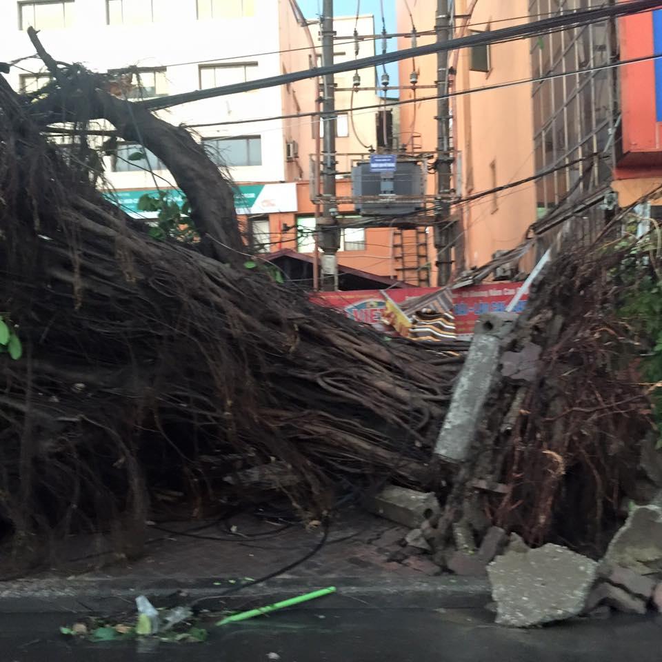Mưa giông khủng khiếp quật ngã hàng loạt cây xanh tại Hà Nội - 8