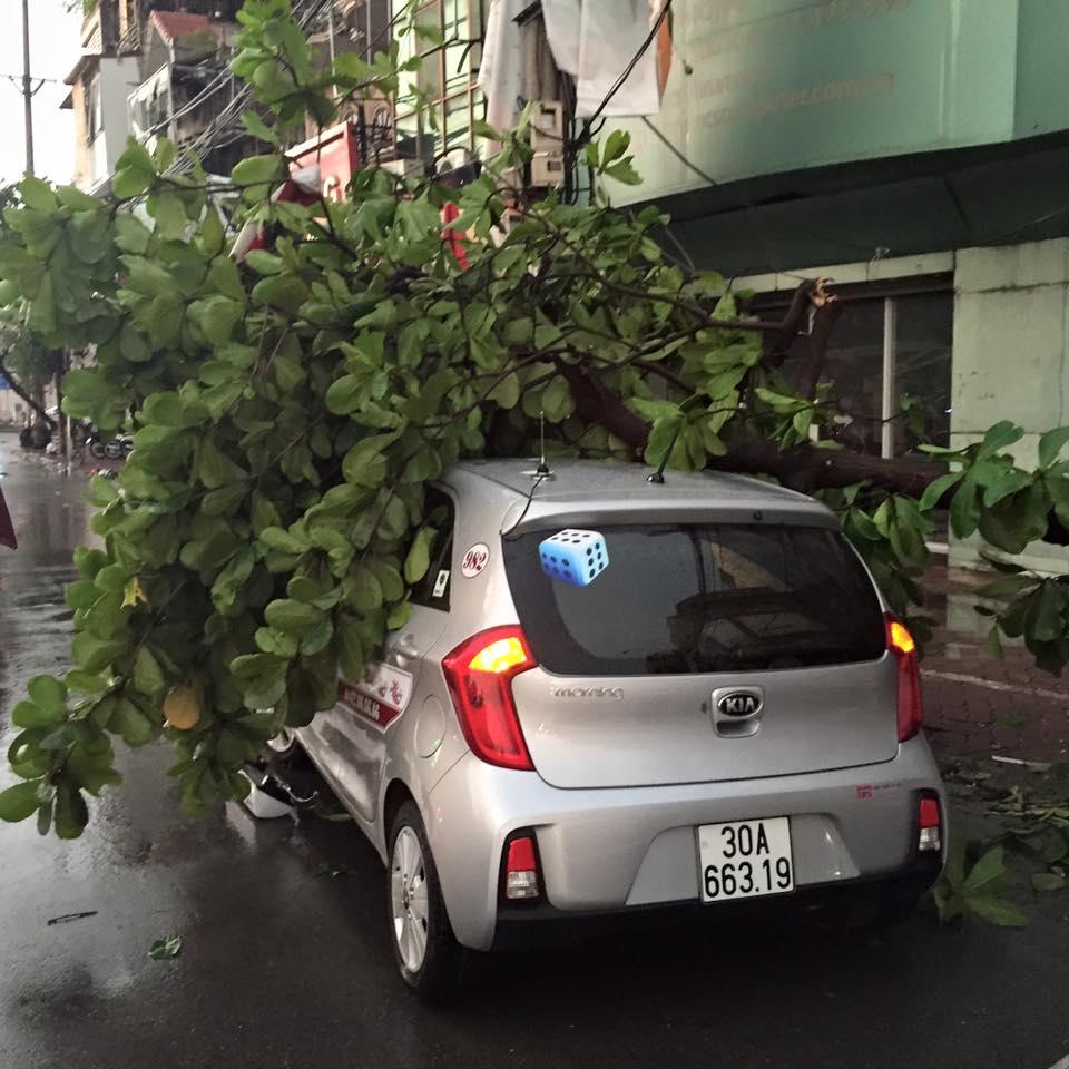 Mưa giông khủng khiếp quật ngã hàng loạt cây xanh tại Hà Nội - 9