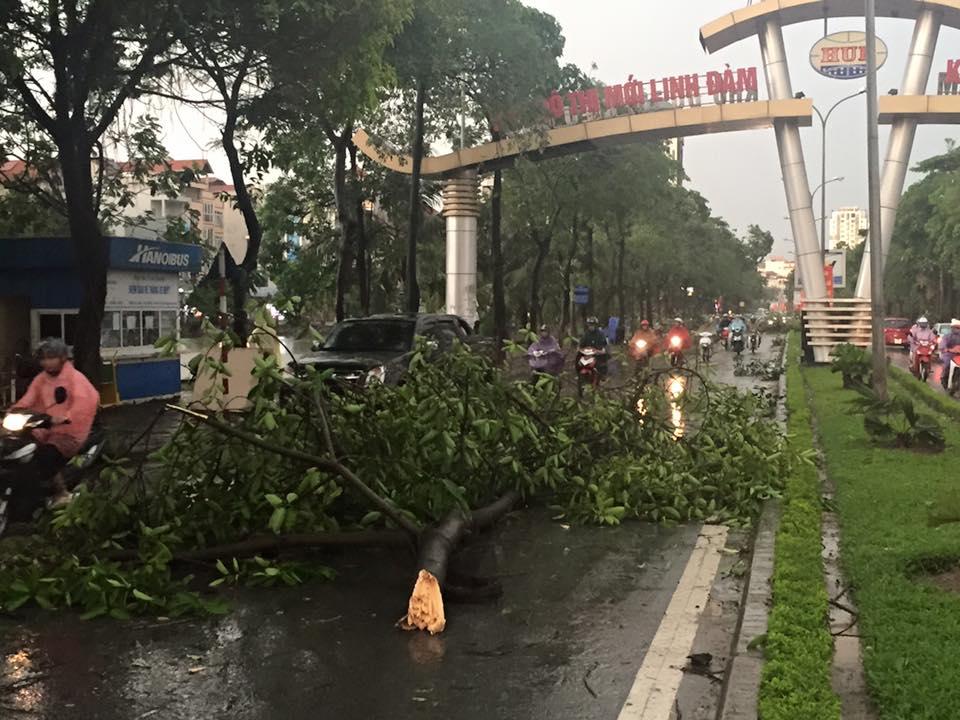 Mưa giông khủng khiếp quật ngã hàng loạt cây xanh tại Hà Nội - 31