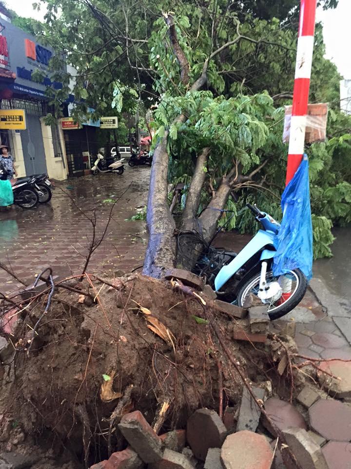 Mưa giông khủng khiếp quật ngã hàng loạt cây xanh tại Hà Nội - 33