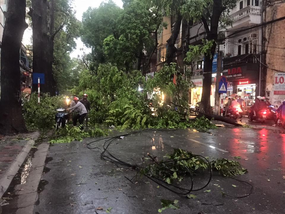 Mưa giông khủng khiếp quật ngã hàng loạt cây xanh tại Hà Nội - 14