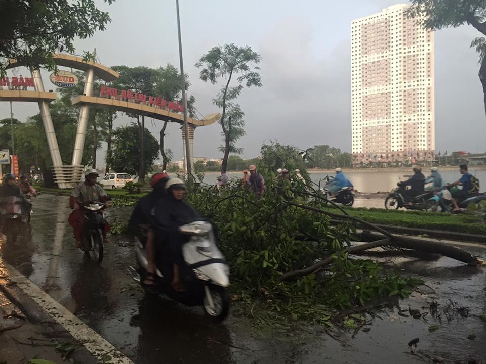 Mưa giông khủng khiếp quật ngã hàng loạt cây xanh tại Hà Nội - 30