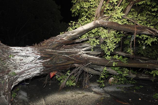 Bộ đội trắng đêm thu dọn cây đổ trong nội thành Hà Nội - 13