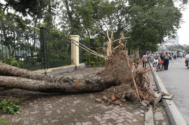 HN cấm đường, đóng cửa công viên sau trận cuồng phong - 14