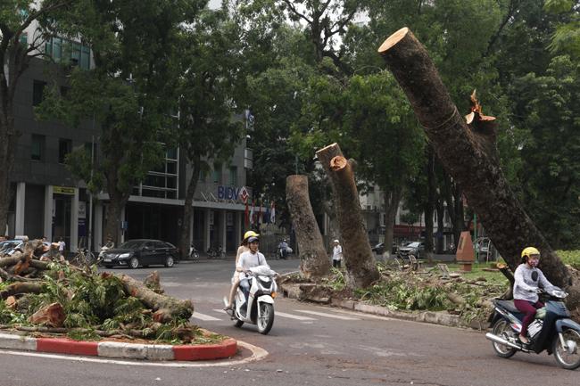 HN cấm đường, đóng cửa công viên sau trận cuồng phong - 17