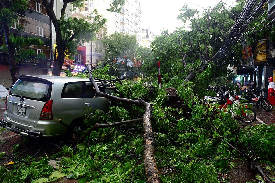 Ô tô của gia đình MC Phan Anh bị cây đè bẹp - 1